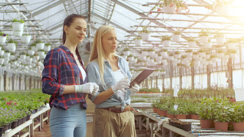 Agricultural Engineer Holds Tablet Computer Walks Through Industrial Greenhouse with Professional Farmer. They Examine State of Plants and Analyze Growing Potential. 8K UHD.