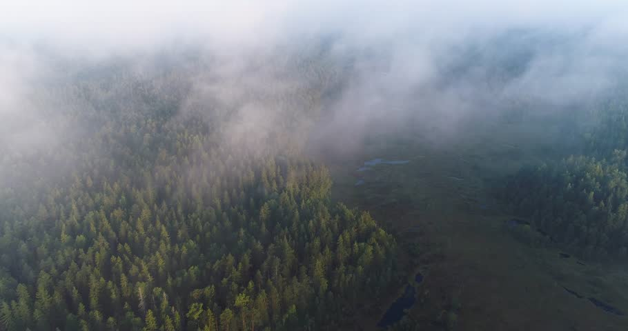 Aerial cinematic view of swamp and forest during summer misty morning at sunrise in a wilderness. Drone flying across clouds and fog. Soidinsuo. Nuuksio. Espoo. Finland. Scandinavia.