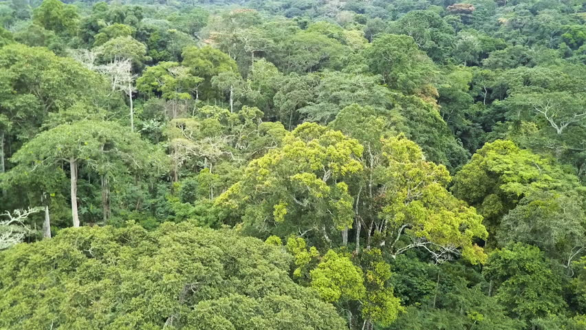 African rain-forest aerial view Congo Basin Cameroon