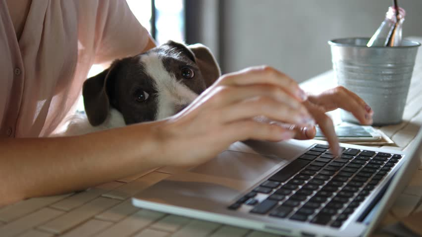 Female Hands Working On Laptop With Cute Dog. 4K.