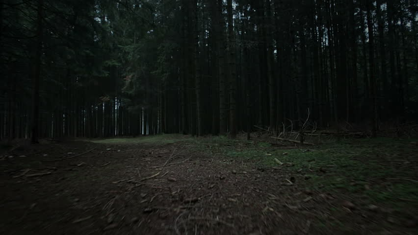 steadicam shot through dark creepy forest