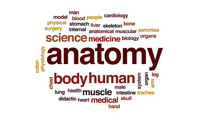 Anatomy Animated Word Cloud, Text Stock Footage Video (100% Royalty-free)  29734315 | Shutterstock