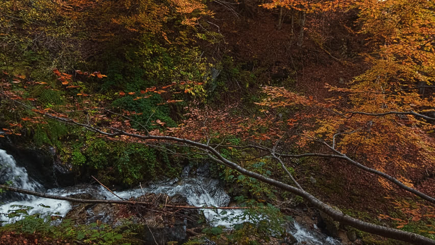 Steady cam footage. Panoramic view of mountain river with waterfall. Autumn in the forest. Pirin National Park - Bulgaria.