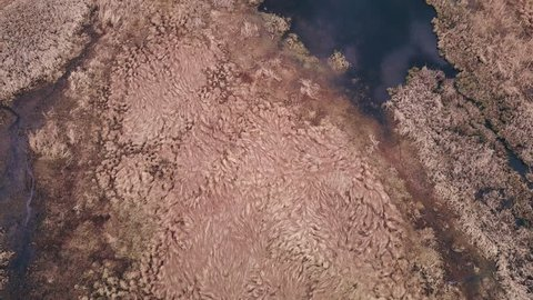 aerial view drone, aerial survey sweltering place,  aerial photography peat bog, on outskirts city, forgotten place with stagnant water, swamp