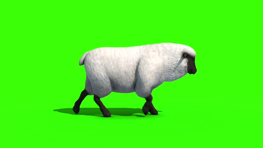 Black Sheep Walkcycle Side Green Screen 3D Rendering Animation