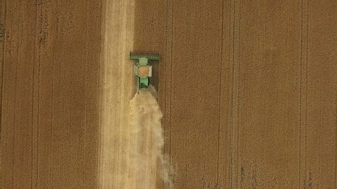 Top view: combines gathering wheat from the agriculture field. Harvesting Crop Production