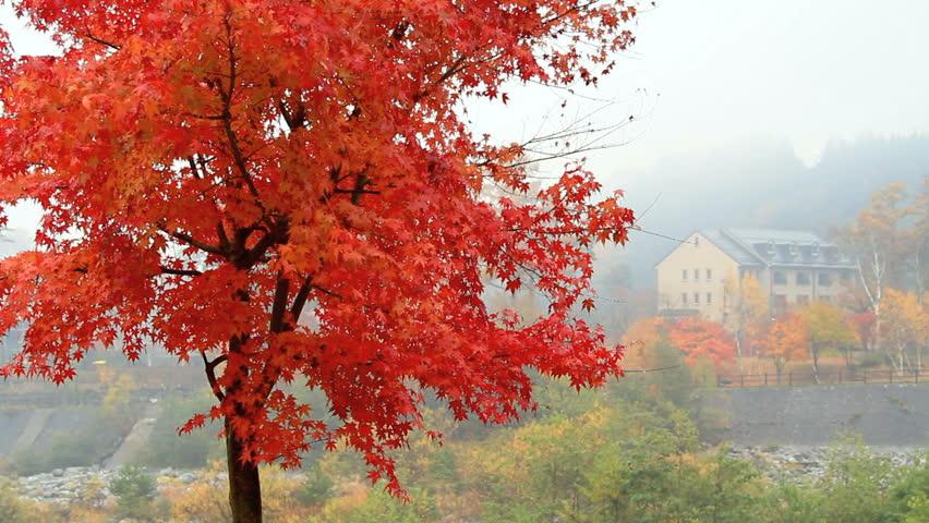 Autumn. Mountain hotel.