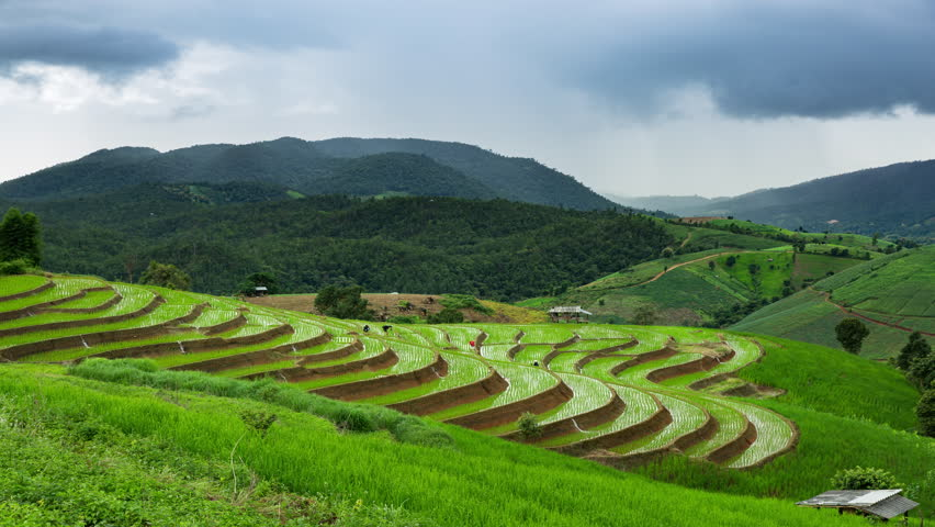 4K Time-lapse : Rice field terrace in organic system at Ban Pa Pong Pieng village, Chaingmai province Thailand.   Shutterstock HD Video #30291520