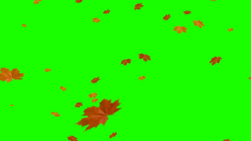 Falling leaves - The Autumn - Green Screen
