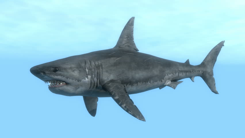 Great White Shark Educational Animation #30447955