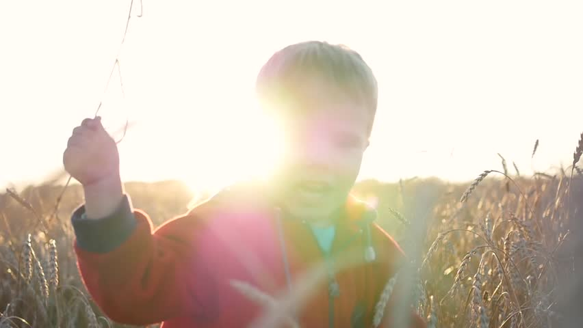 A child stands in a field of wheat. The boy is holding a ear of wheat. Sunset | Shutterstock HD Video #30720223