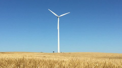 Single wind turbine spins around generating energy with bright brown hay field in the foreground and a flawless blue sky background.