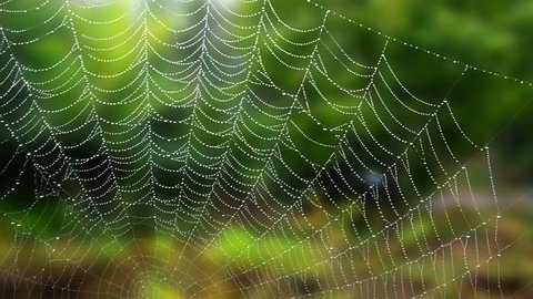 Cobweb covered in dew drops sparkling and moving in the wind in front of blurred green trees background. Animated spiderweb.