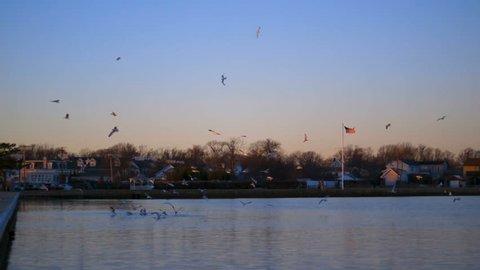 Flock Of Birds Over Water 01
