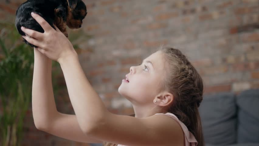 Little girl playing with yorkshire terrier puppy | Shutterstock HD Video #30869995