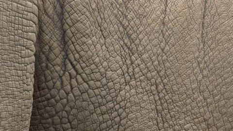 White rhino's skin