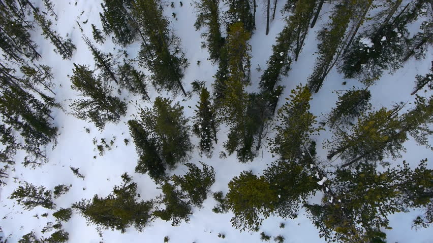 Aerial view over pine trees. BANFF National Park, Alberta, Canada. Snow winter.