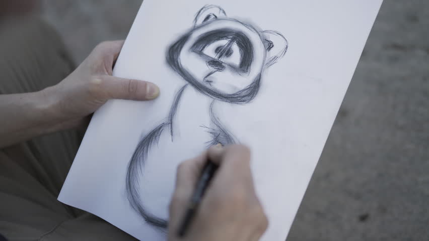 Woman is drawing with pencil sketch of raccoon artist is working on a project