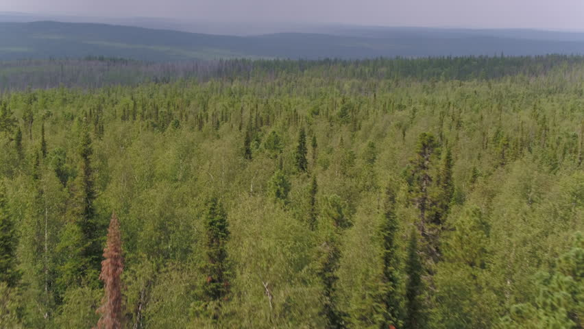 a study on the taiga forest In humanities we did a project which was about biome's we had to choose one biome and i picked the taiga biome then i did some research,.