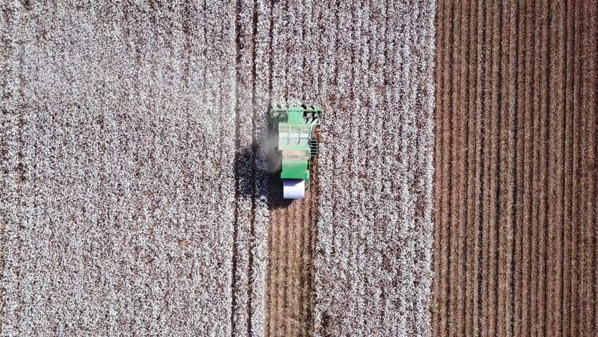 Aerial footage of a Cotton picker working in a large cotton field | Shutterstock HD Video #31205725