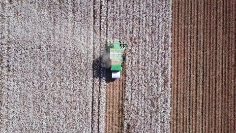Aerial footage of a Cotton picker working in a large cotton field