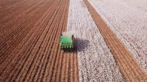 Haifa, Israel - August 23, 2017: Large six row cotton picker combine harvester working on a vast field, fully automated process from picking to producing cotton bales.