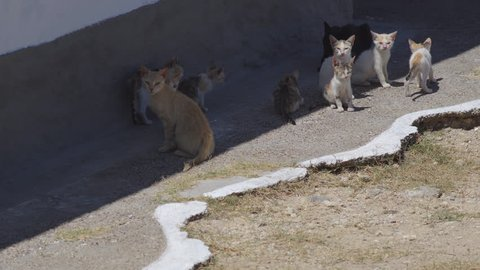 A Group Of Stray Cat Kittens Squinting And Warming Themselves In The Bright Sun In Greece.