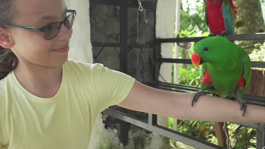 Eclectus parrot on the hand of a young girl stock footage video