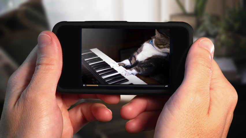 A man holding a smartphone watches a viral video of a funny cat playing a keyboard or electric organ.	 	 | Shutterstock HD Video #31358815