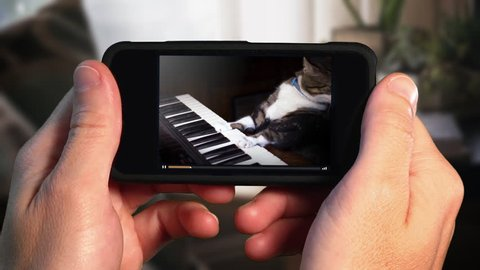 A man holding a smartphone watches a viral video of a funny cat playing a keyboard or electric organ.