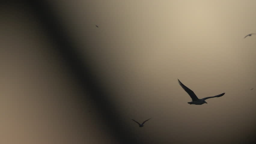 Bird Flies Through Light and Dark - A black bird is seen flying across a peach-colored evening sky, and he passes black shadows/objects along the way