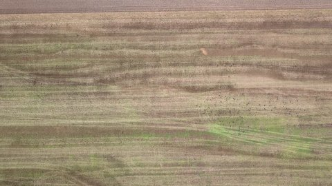Crows Picking Over Prairie Burn On >> Crow On The Field Stock Video Footage 4k And Hd Video Clips