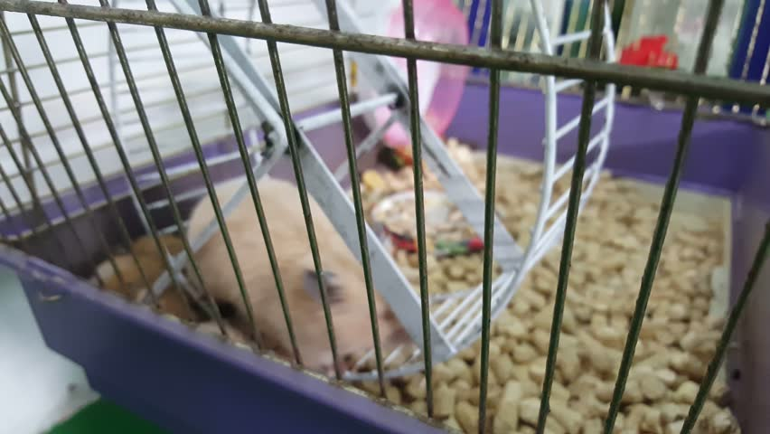 Hamster in cage  | Shutterstock HD Video #31508098