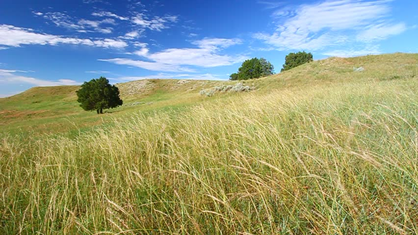 Prairie hillside under a gentle breeze in South Dakota | Shutterstock HD Video #3152695