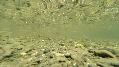 fish swarm underwater view