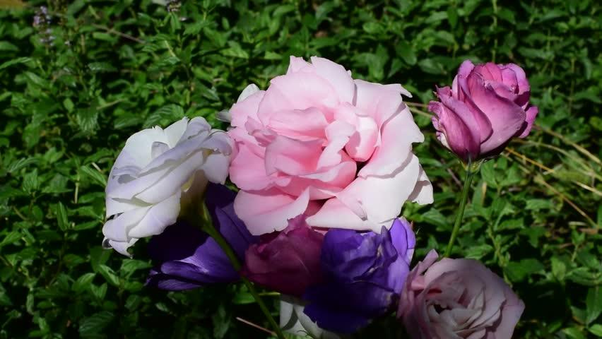 Multicolor summer flowers in the wind | Shutterstock HD Video #31612807