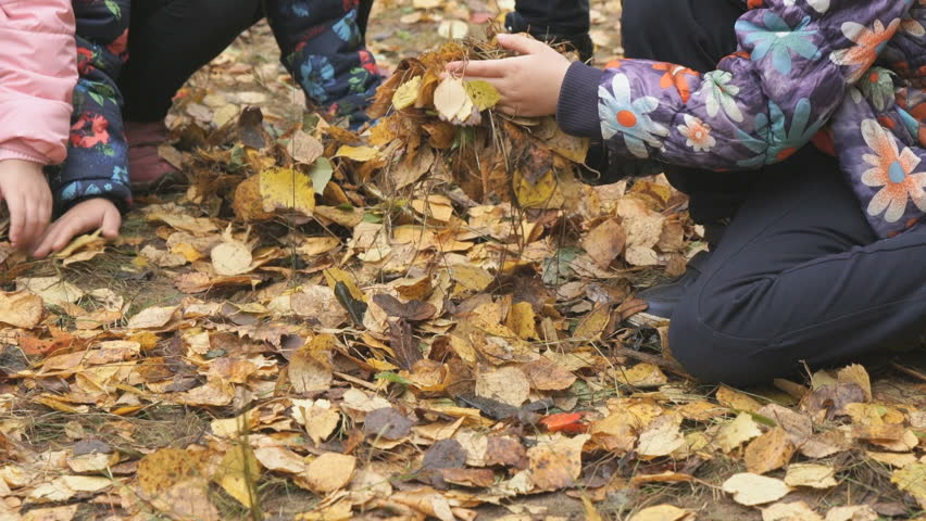 Autumn time. Unidentified little children dressed in warm jackets take the yellow foliage in their hands in the park in autumn | Shutterstock HD Video #31706605