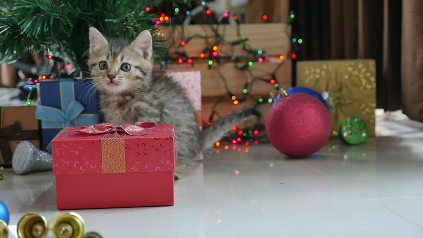 Cute tabby kitten playing in a gift box with Christmas decoration | Shutterstock HD Video #31709125