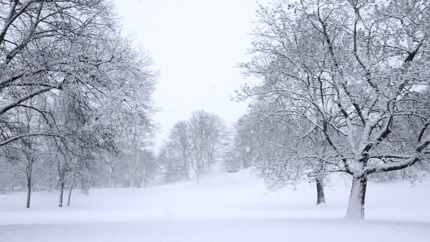 Falling snow in a winter park with snow covered trees, slow motion, filmed at 60p | Shutterstock Video #3178852