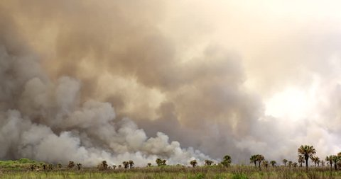 Dense smoke rising from a Florida wildfire