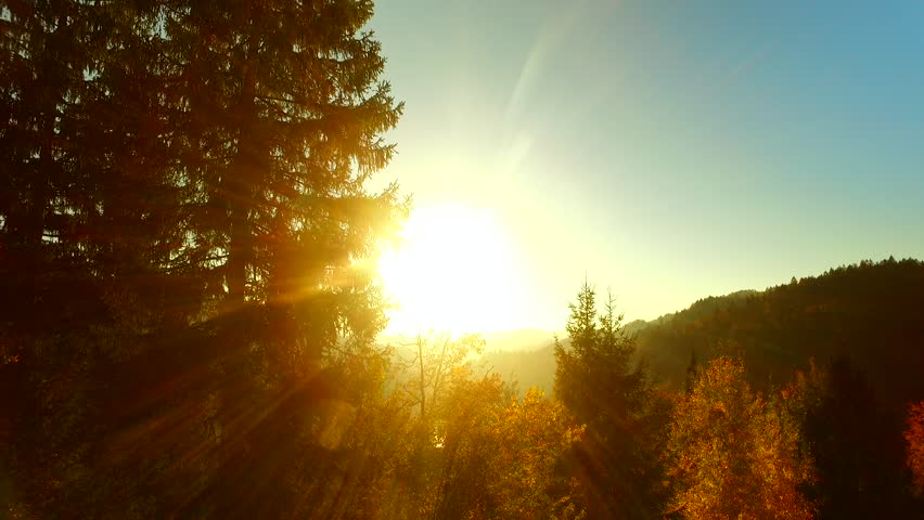 Last rays of a sun, shinning through spruce forest in the afternoon, before darkness arises. Autumn time. Autumn weather.   Shutterstock HD Video #31935475
