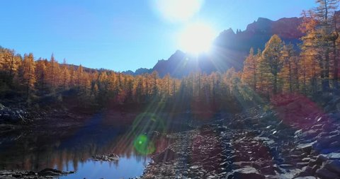 forward aerial over alpine mountain valley lake and orange larch forest woods in sunny autumn.Alps outdoor colorful nature scape mountains wild fall establisher.4k drone flight establishing shot