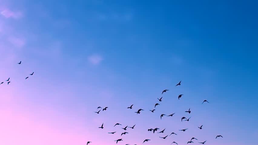 Large Flock Of Birds A Flock Of Birds Against The Sky