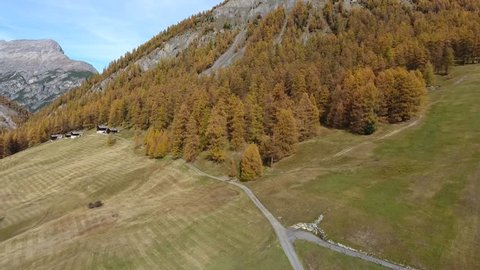 Nature in Valtellina, October in Livigno, forest in autumn