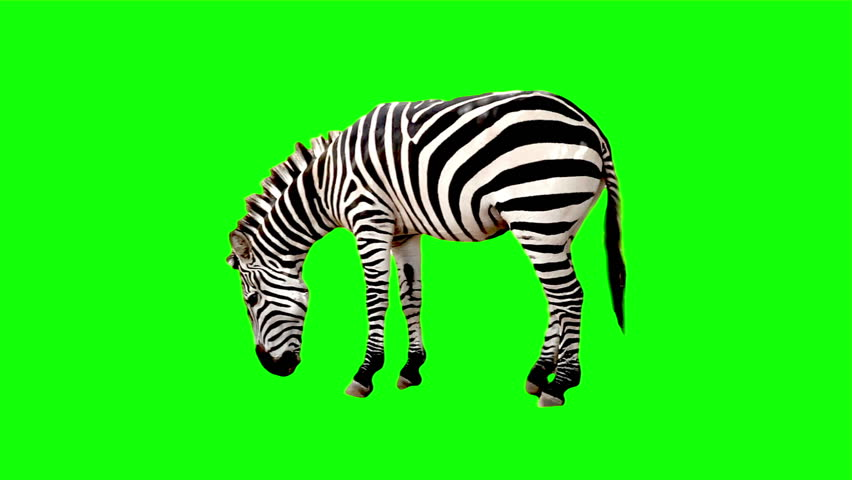 Zebra chroma key