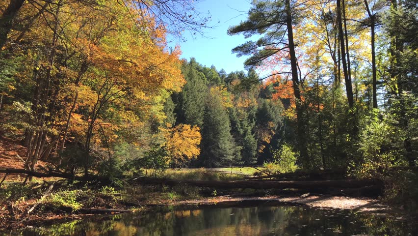 New England in Autumn, New England in the Fall, Colorful Autumn Trees and Leaves surrounding a pond and stream with dead trees and tall pine trees.