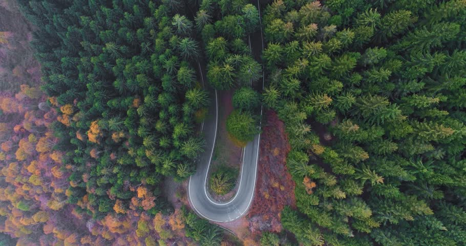 Overhead aerial top view over hairpin bend turn road in countryside autumn forest.Fall orange,green,yellow red pine tree woods.Fog Street path establisher.4k drone flight straight-down establishing