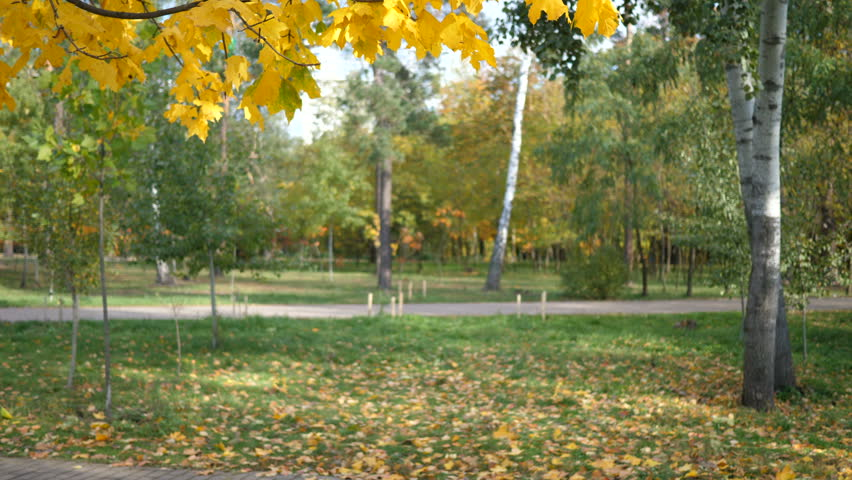Hd00 06autumn Sunny Forest Background Park Beautiful Scene