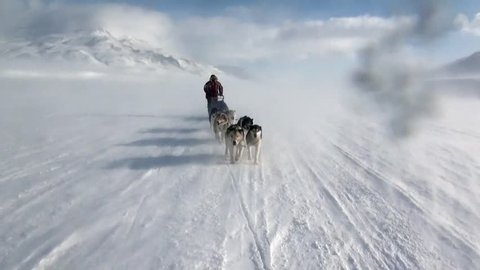 Man riding dog sled team husky Eskimo white snowy road of North Pole in Arctic. Way from airport Longyear to Pyramid on Spitsbergen on background of glacier mountains of Svalbard in Norway.