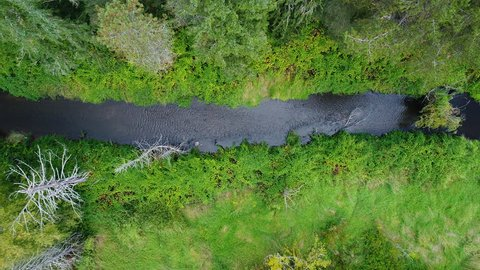 Aerial Top Down View of Creek in Lush Green Washington State Forest